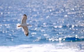 seagullll