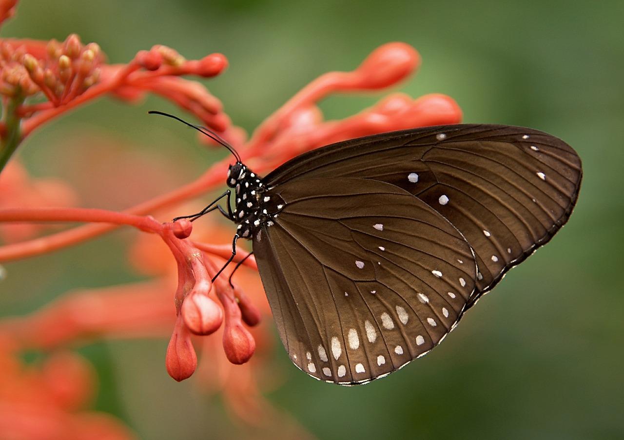 Motýlia TERAPIA vnútorného DIEŤAŤA III
